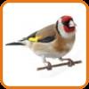 Divoké ptactvo