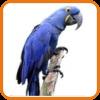 Velký papoušek